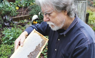 <p>Kevin Turner takes a closer look at one of the honeycombs made in his hive. Photo by Gwen Davis</p>